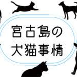 【現実】宮古島の動物事情【モラル】